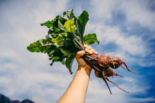 vegan CSA share lancaster, pa