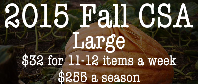 Fall CSA Large