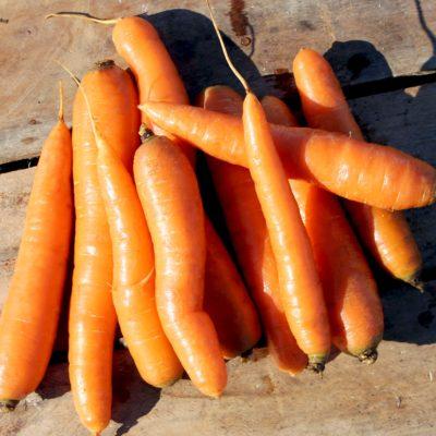 organic orange carrots