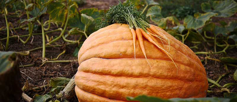 5 Reasons Fall CSA Rocks