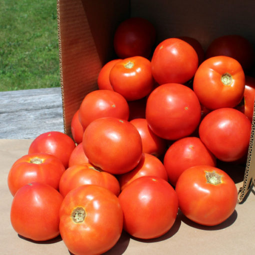 organic red slicing tomatoes