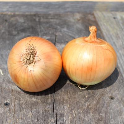 organic sweet onion