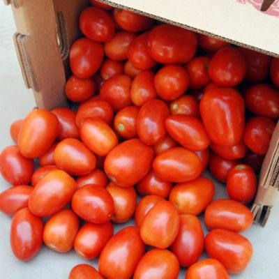 bulk organic roma tomatoes lancaster