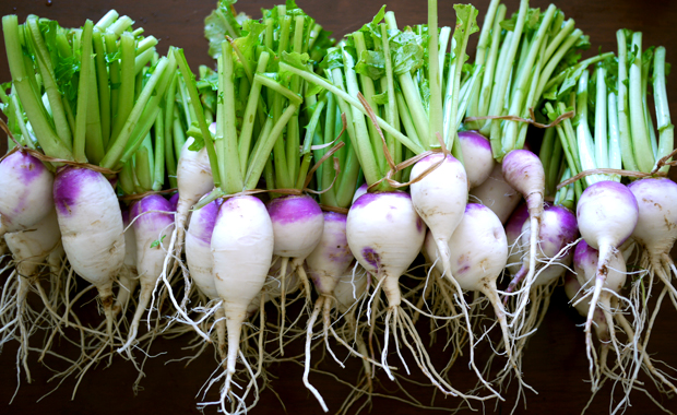 turnips bunch