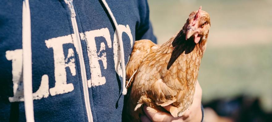 Farm Fresh Meat & Chicken