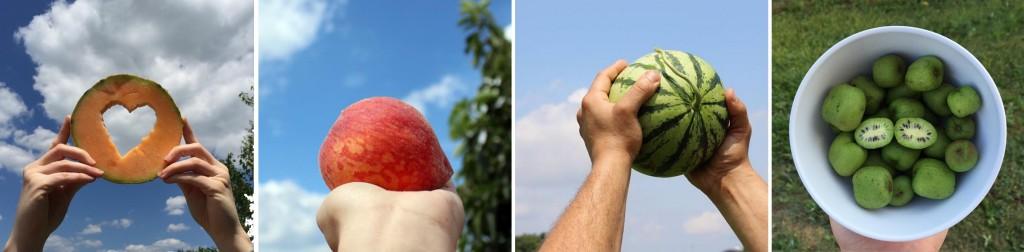 fruitsline