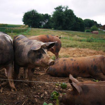 Organic Meat Share